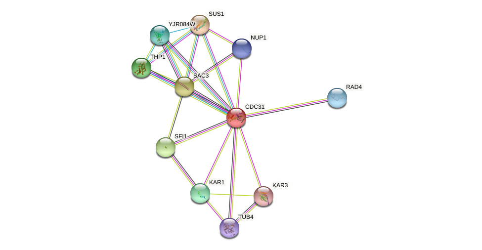 CDC31 protein (Saccharomyces cerevisiae) - STRING interaction network