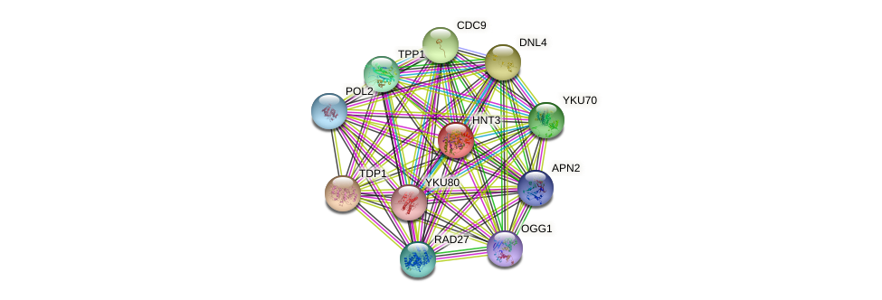 HNT3 protein (Saccharomyces cerevisiae) - STRING interaction network