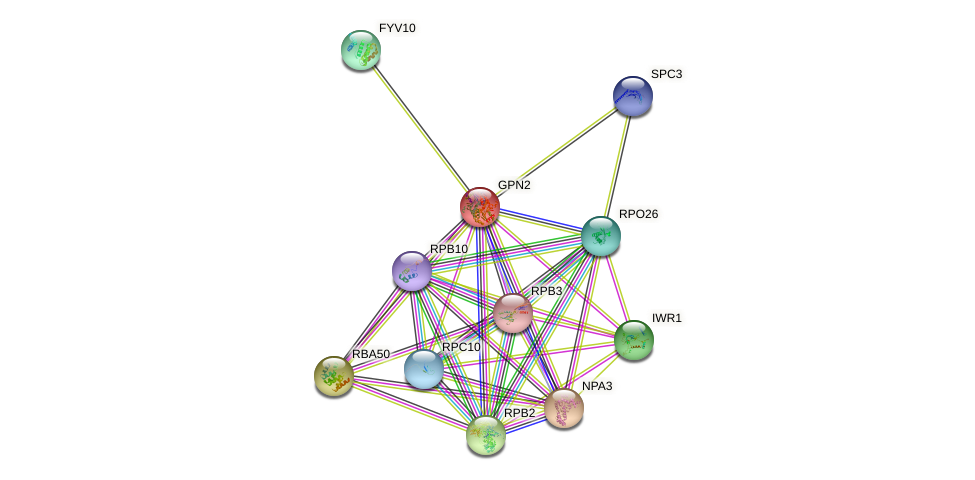 GPN2 protein (Saccharomyces cerevisiae) - STRING interaction network
