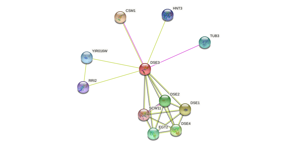 DSE3 protein (Saccharomyces cerevisiae) - STRING interaction network