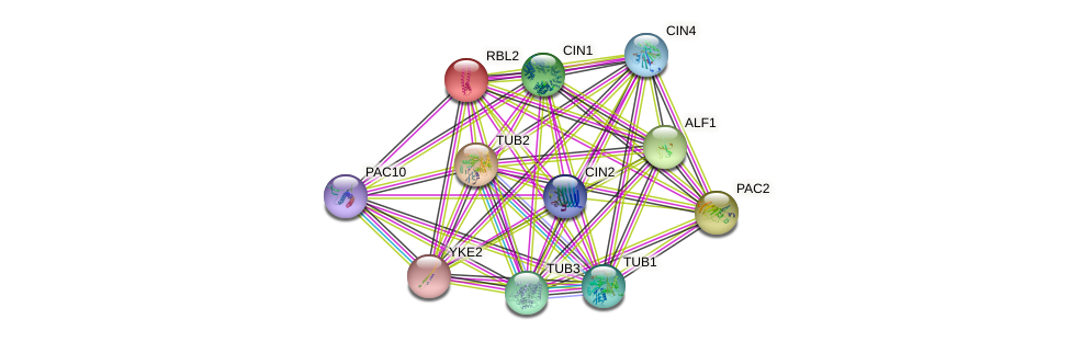 RBL2 protein (Saccharomyces cerevisiae) - STRING interaction network