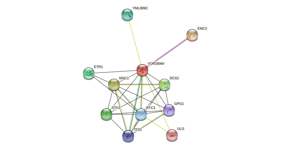 YOR289W protein (Saccharomyces cerevisiae) - STRING interaction network