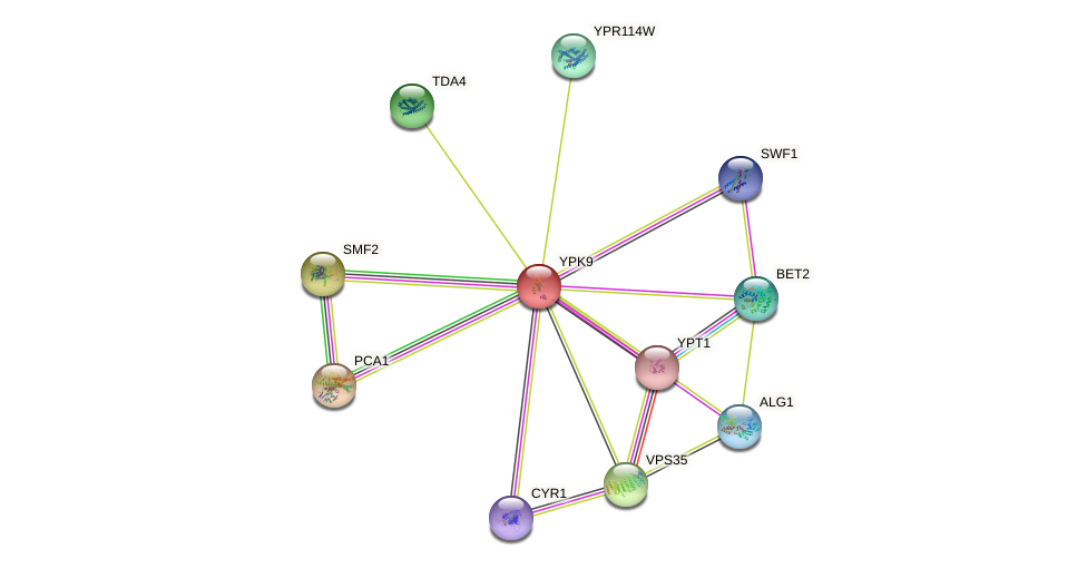 YPK9 protein (Saccharomyces cerevisiae) - STRING interaction network