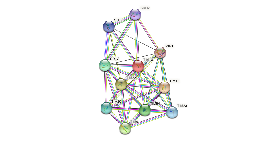 TIM18 protein (Saccharomyces cerevisiae) - STRING interaction network