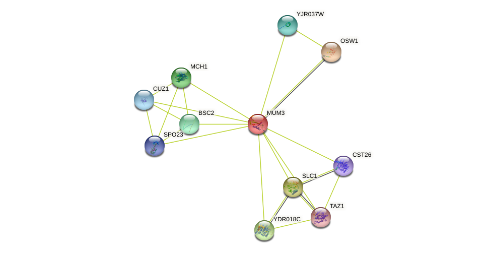 MUM3 protein (Saccharomyces cerevisiae) - STRING interaction network