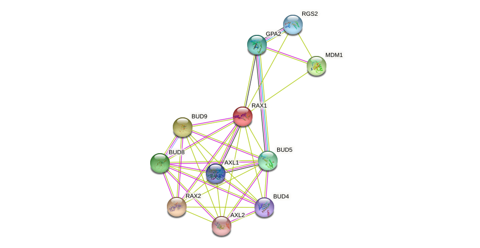 RAX1 protein (Saccharomyces cerevisiae) - STRING interaction network