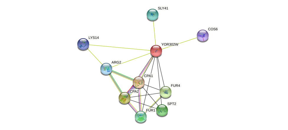 YOR302W protein (Saccharomyces cerevisiae) - STRING interaction network