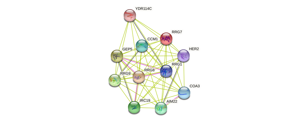 RRG7 protein (Saccharomyces cerevisiae) - STRING interaction network