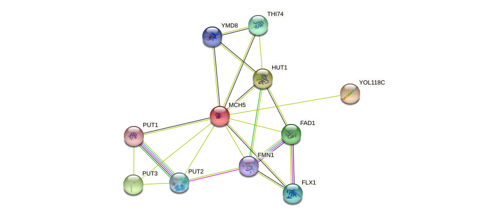 MCH5 protein (Saccharomyces cerevisiae) - STRING interaction network
