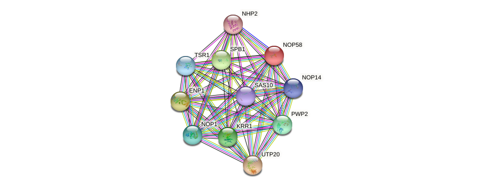 NOP58 protein (Saccharomyces cerevisiae) - STRING interaction network