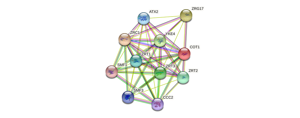 COT1 protein (Saccharomyces cerevisiae) - STRING interaction network