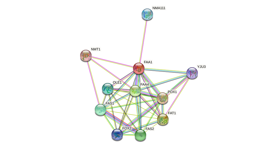 FAA1 protein (Saccharomyces cerevisiae) - STRING interaction network
