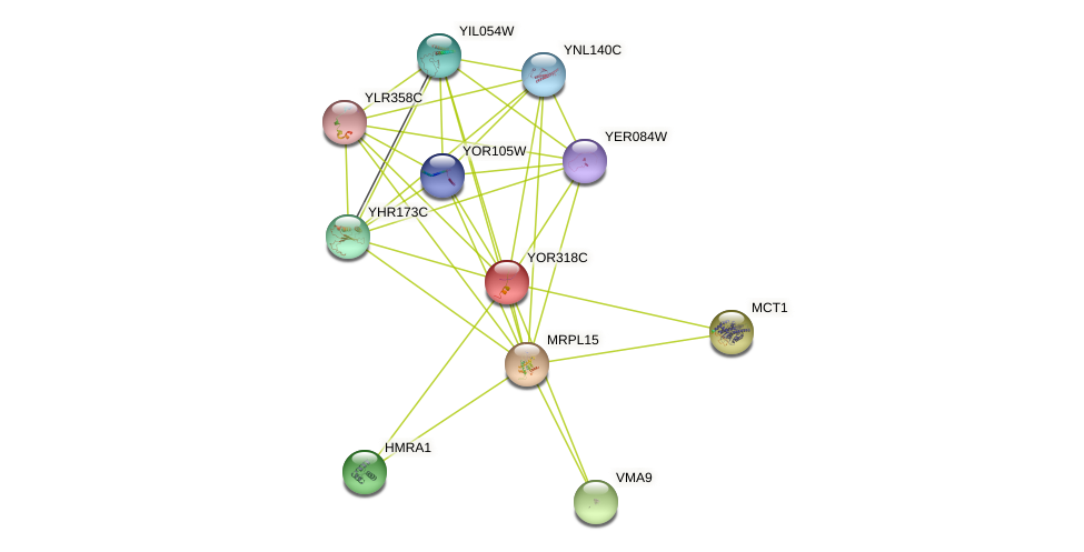 YOR318C protein (Saccharomyces cerevisiae) - STRING interaction network