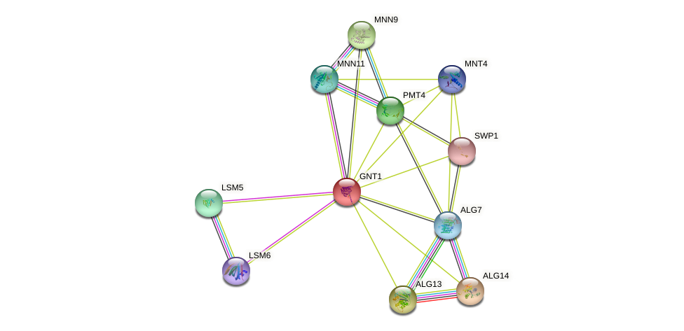 GNT1 protein (Saccharomyces cerevisiae) - STRING interaction network