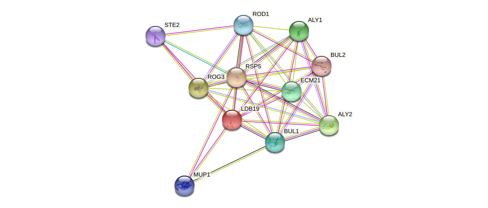 LDB19 protein (Saccharomyces cerevisiae) - STRING interaction network