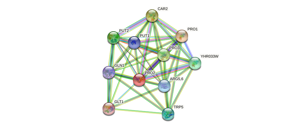 PRO2 protein (Saccharomyces cerevisiae) - STRING interaction network