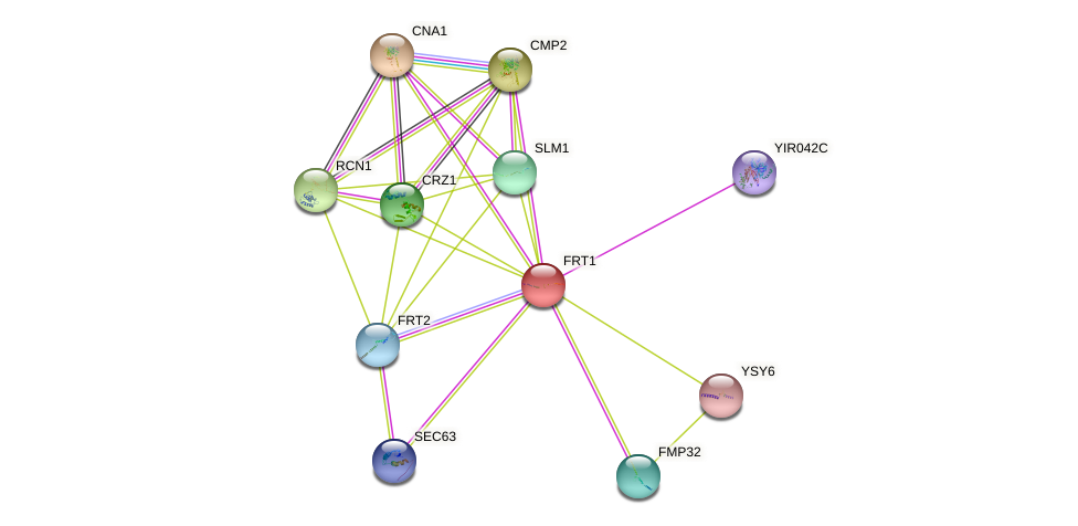 FRT1 protein (Saccharomyces cerevisiae) - STRING interaction network