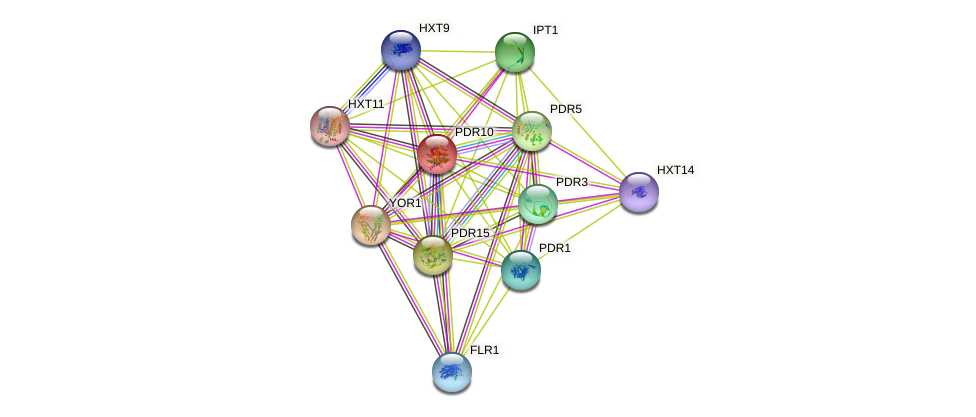 PDR10 protein (Saccharomyces cerevisiae) - STRING interaction network