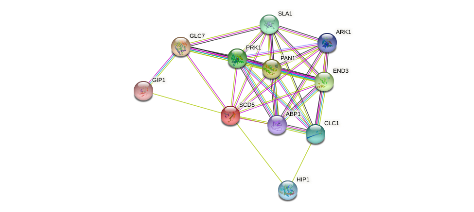 SCD5 protein (Saccharomyces cerevisiae) - STRING interaction network