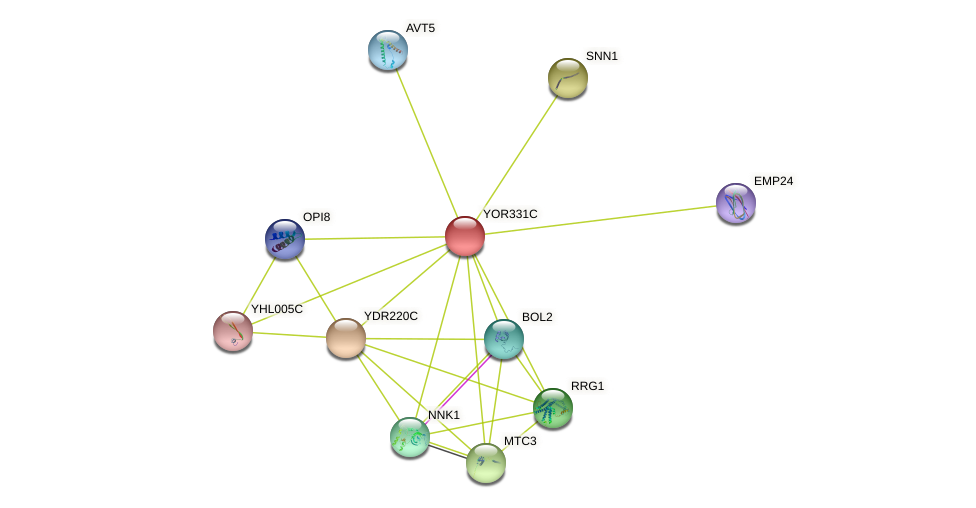 YOR331C protein (Saccharomyces cerevisiae) - STRING interaction network