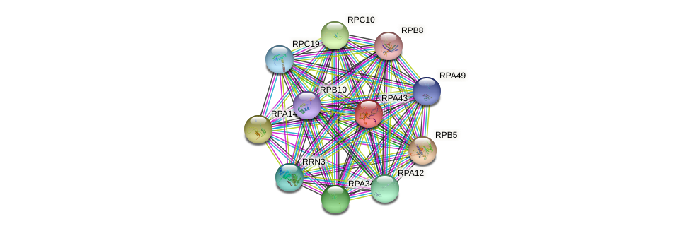 RPA43 protein (Saccharomyces cerevisiae) - STRING interaction network