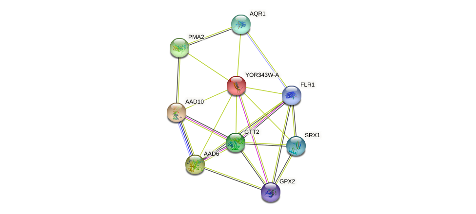 YOR343W-A protein (Saccharomyces cerevisiae) - STRING interaction network