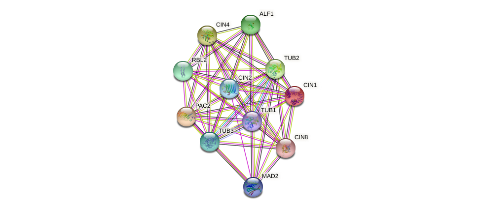 CIN1 protein (Saccharomyces cerevisiae) - STRING interaction network