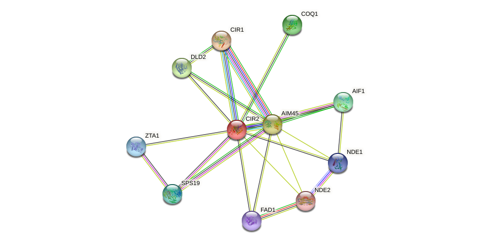 CIR2 protein (Saccharomyces cerevisiae) - STRING interaction network