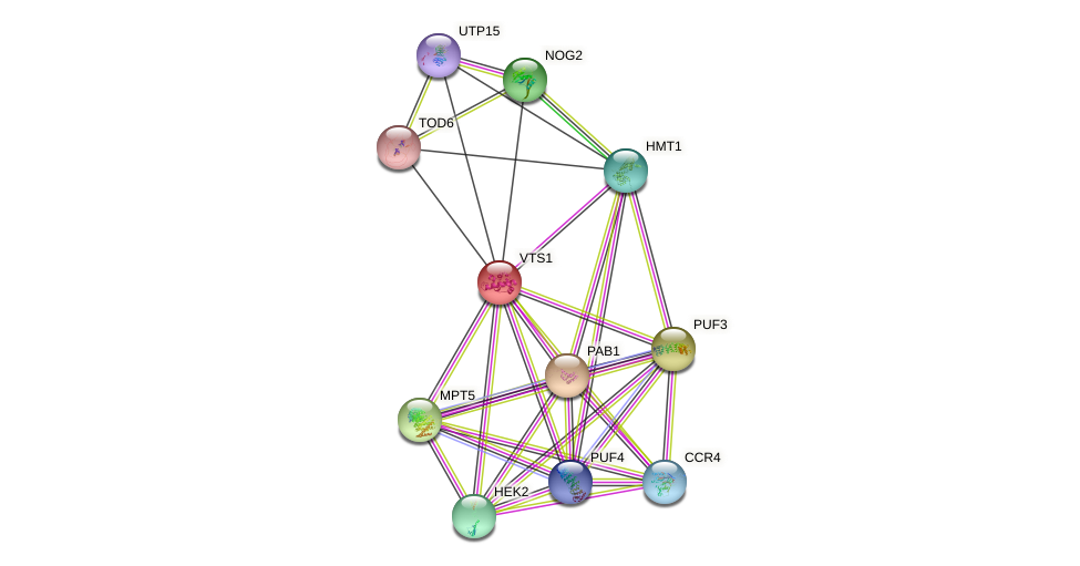 VTS1 protein (Saccharomyces cerevisiae) - STRING interaction network