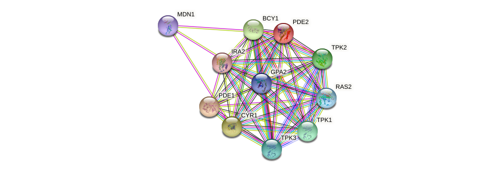 PDE2 protein (Saccharomyces cerevisiae) - STRING interaction network