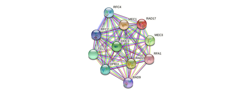 RAD17 protein (Saccharomyces cerevisiae) - STRING interaction network