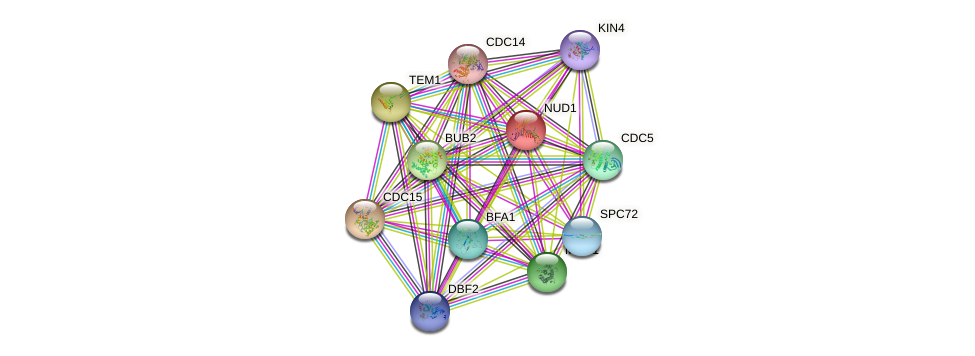 NUD1 protein (Saccharomyces cerevisiae) - STRING interaction network