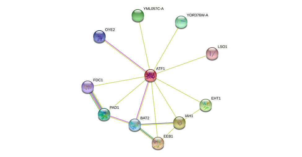 ATF1 protein (Saccharomyces cerevisiae) - STRING interaction network