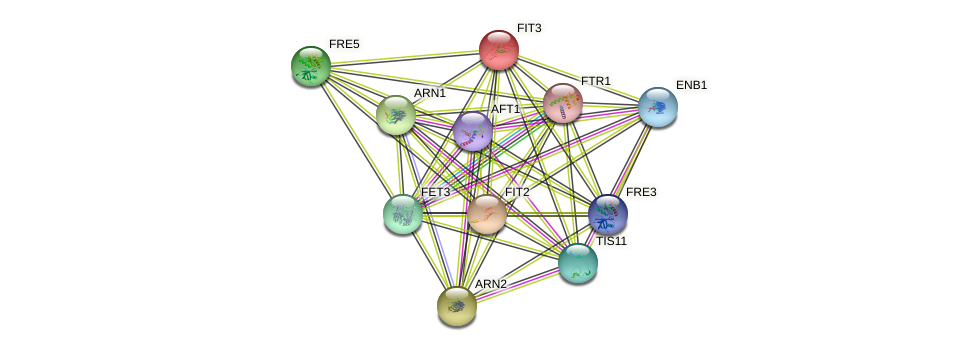 FIT3 protein (Saccharomyces cerevisiae) - STRING interaction network