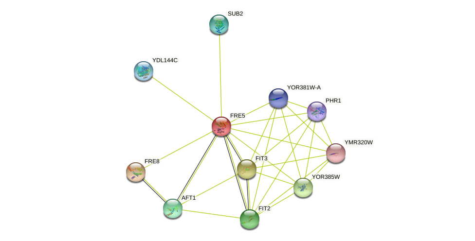 FRE5 protein (Saccharomyces cerevisiae) - STRING interaction network