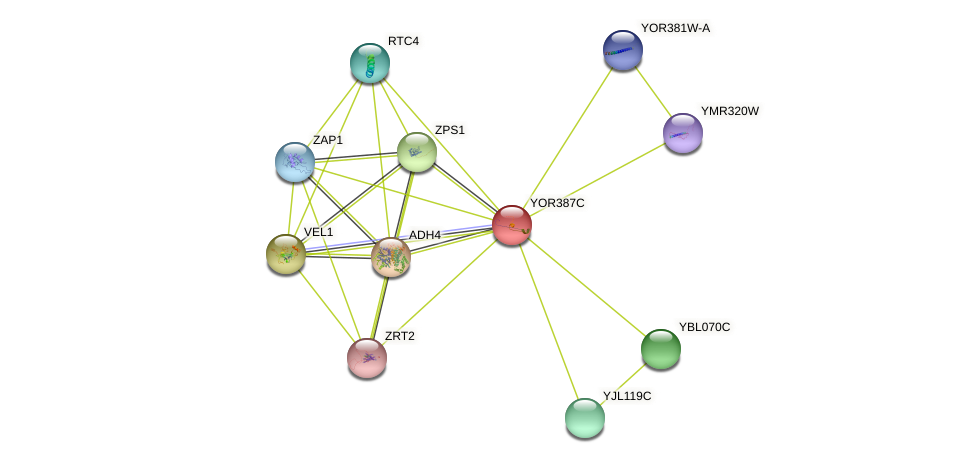 YOR387C protein (Saccharomyces cerevisiae) - STRING interaction network