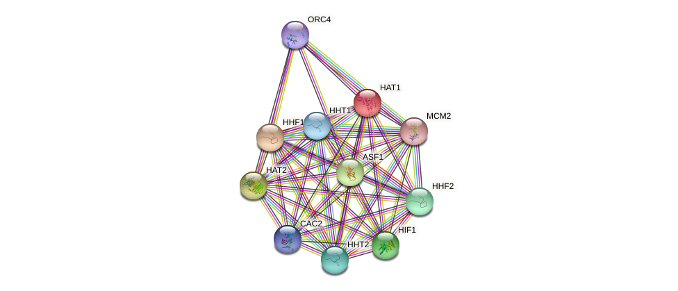 HAT1 protein (Saccharomyces cerevisiae) - STRING interaction network