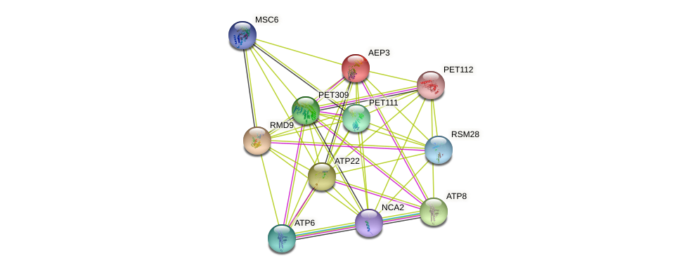AEP3 protein (Saccharomyces cerevisiae) - STRING interaction network