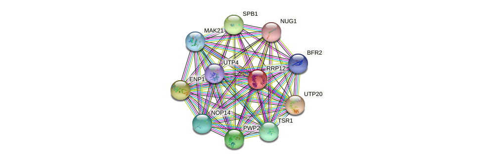 RRP12 protein (Saccharomyces cerevisiae) - STRING interaction network