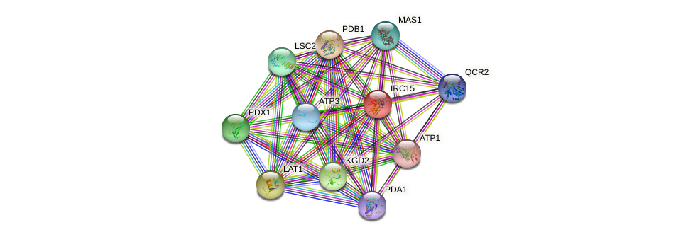 IRC15 protein (Saccharomyces cerevisiae) - STRING interaction network