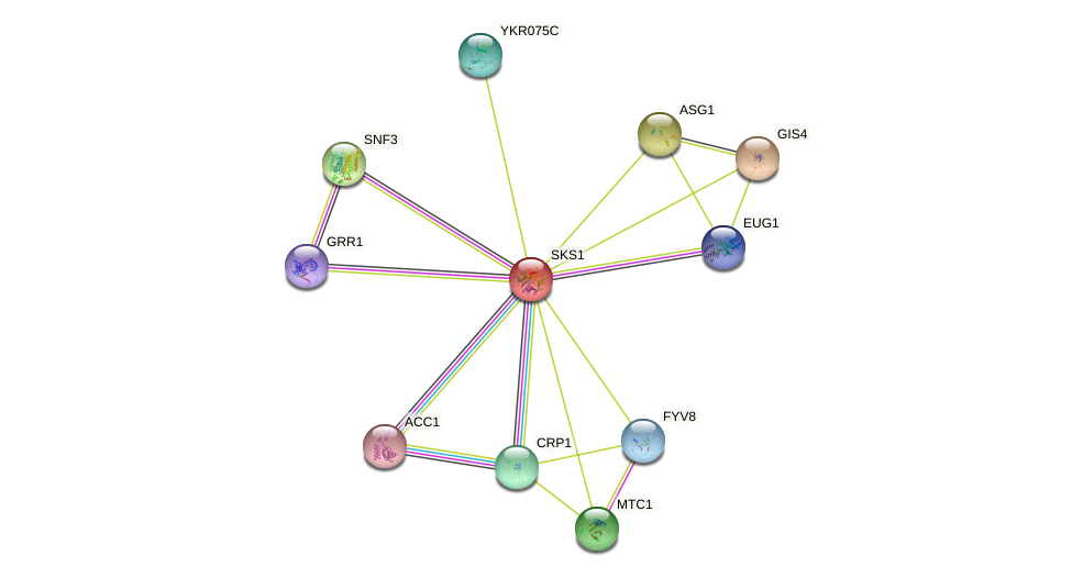 SKS1 protein (Saccharomyces cerevisiae) - STRING interaction network