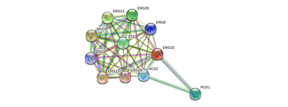 ERG10 protein (Saccharomyces cerevisiae) - STRING interaction network
