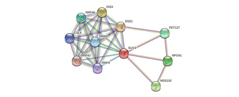 SUV3 protein (Saccharomyces cerevisiae) - STRING interaction network