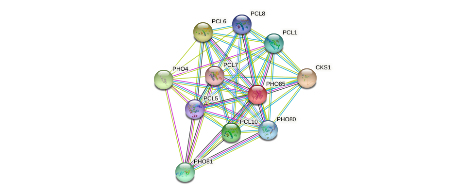 PHO85 protein (Saccharomyces cerevisiae) - STRING interaction network
