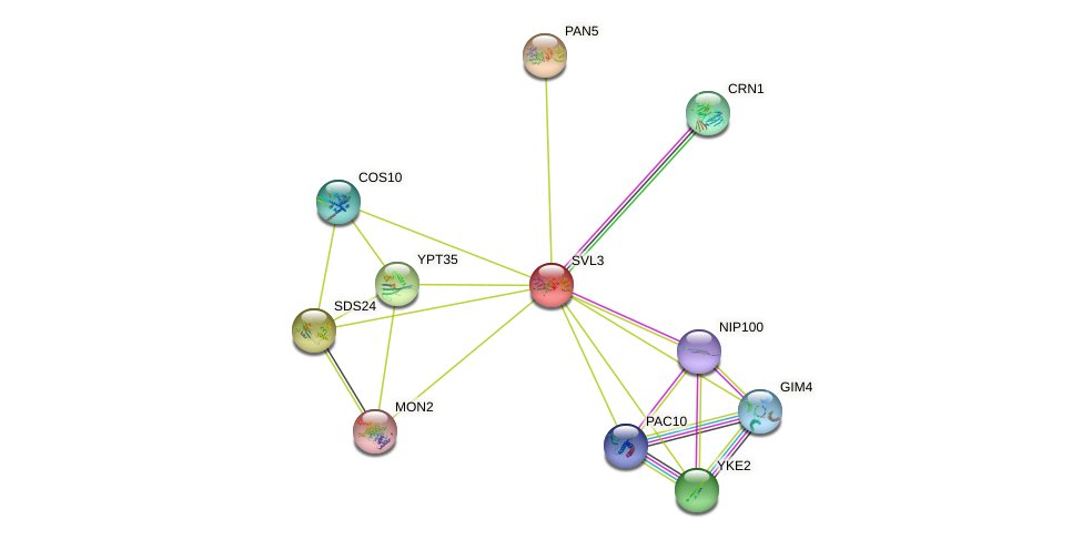 SVL3 protein (Saccharomyces cerevisiae) - STRING interaction network