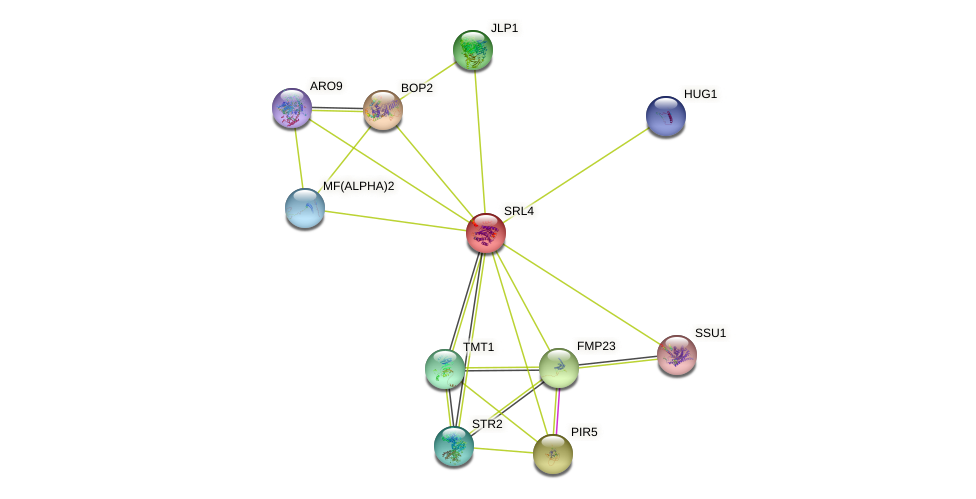 SRL4 protein (Saccharomyces cerevisiae) - STRING interaction network