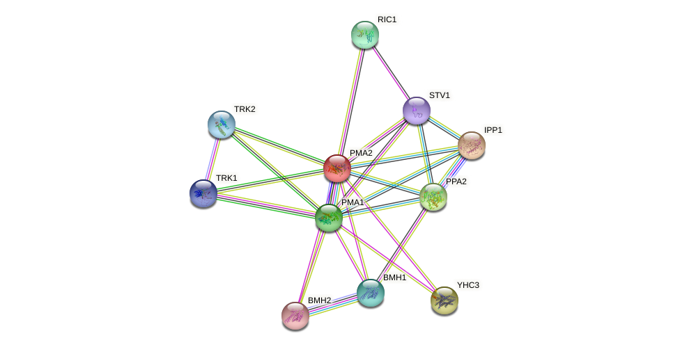 PMA2 protein (Saccharomyces cerevisiae) - STRING interaction network