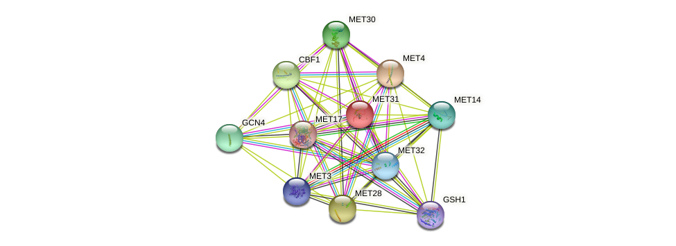 MET31 protein (Saccharomyces cerevisiae) - STRING interaction network
