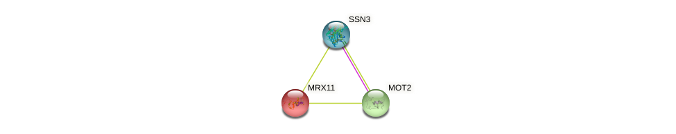 MRX11 protein (Saccharomyces cerevisiae) - STRING interaction network