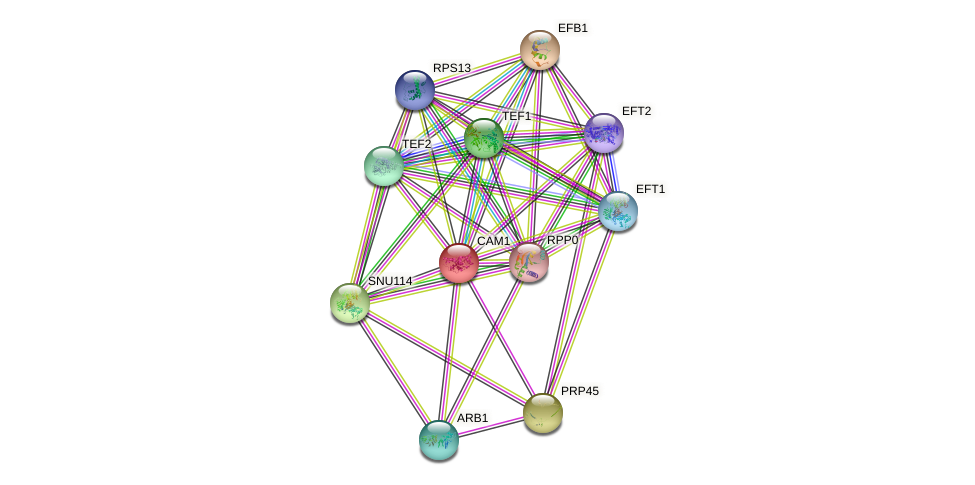 CAM1 protein (Saccharomyces cerevisiae) - STRING interaction network